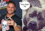 OMG! WTH? Did Ronnie Magro Kill Jen Harley's Dog?