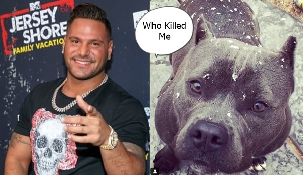 OMG! WTH? Did Ronnie Magro Kill Jen Harley's Dog?